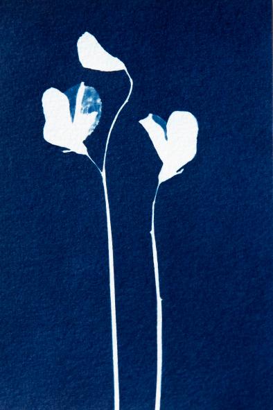 Cyanotype Jonna van Hesteren_04
